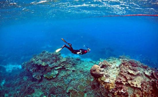 Lượng oxy trong nước biển đang giảm dần