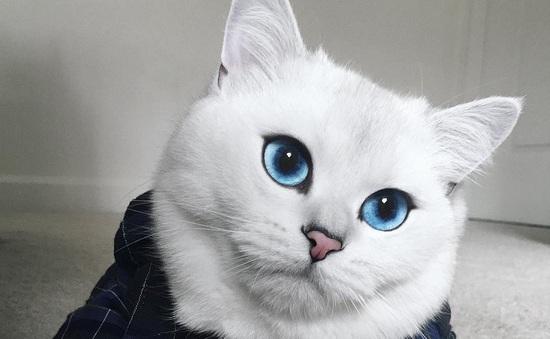 Chắc chắn bạn chưa từng thấy đôi mắt nào xanh như thế này!