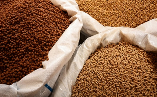 Bắt quả tang cơ sở sản xuất thức ăn chăn nuôi sử dụng hóa chất công nghiệp