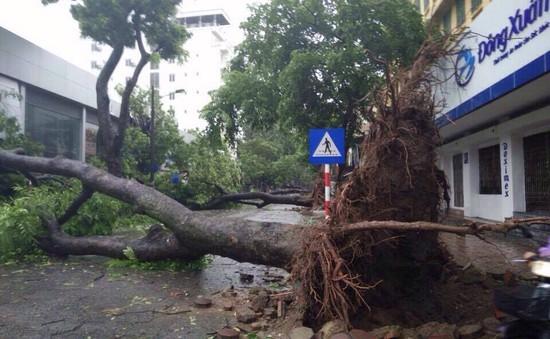 Công ty Cây xanh Hà Nội lên phương án ứng phó với bão số 2