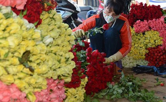 Hoa Đà Lạt sau thu hoạch bị tổn thất đến 40%
