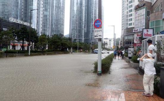 Bão Chaba hoành hành tại Hàn Quốc, ít nhất 5 người thiệt mạng