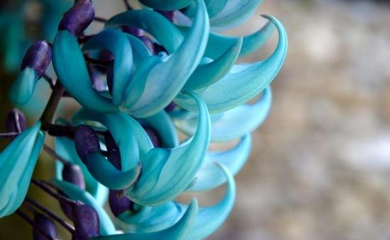 Chiêm ngưỡng 10 loài hoa hiếm và đẹp nhất thế giới