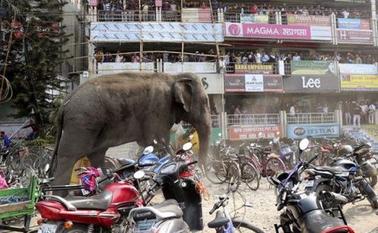 Voi lạc nổi giận phá hủy hàng trăm nhà dân tại Ấn Độ