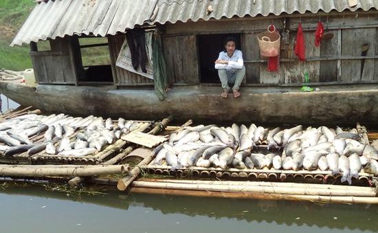 Xử phạt gần 4 tỷ đồng 3 cơ sở gây ô nhiễm sông Bưởi