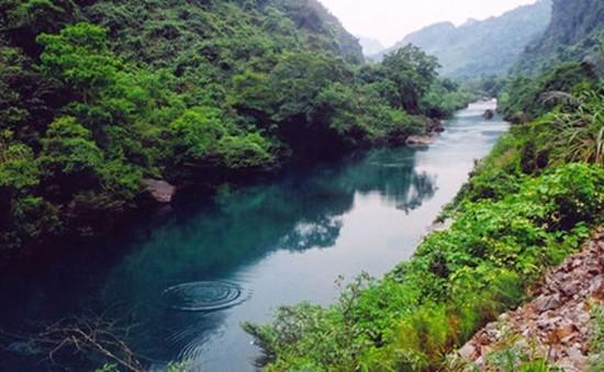 Du lịch vườn thực vật Phong Nha - Điểm mới hấp dẫn du khách