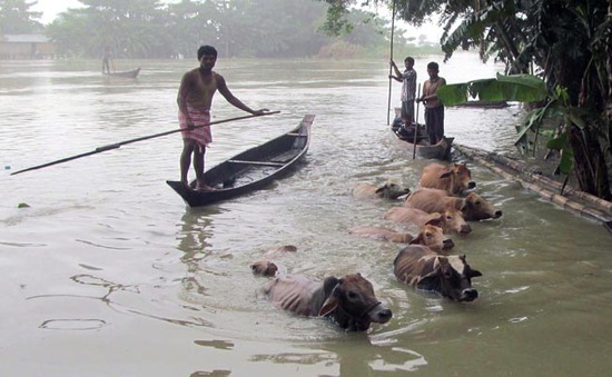 Ấn Độ: Lũ lụt nhấn chìm bang Assam