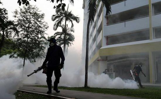Cụm tin quốc tế chiều 7/9: Thái Lan bác tin dịch Zika đang lan rộng