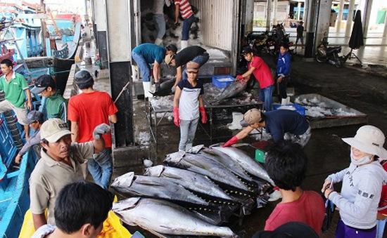 Phú Yên công bố chuỗi liên kết cá ngừ