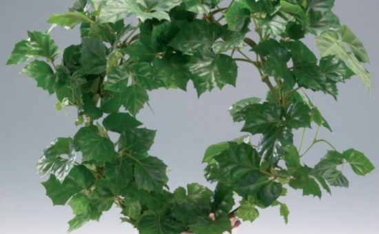 10 loại cây cảnh giúp cho cho không khí nhà bạn hoàn hảo