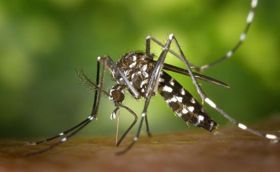 Virus Zika có khả năng gây teo tinh hoàn