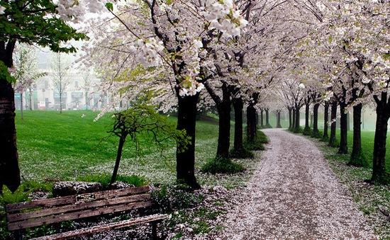 Xao xuyến trước những con đường đẹp đầy huyền ảo