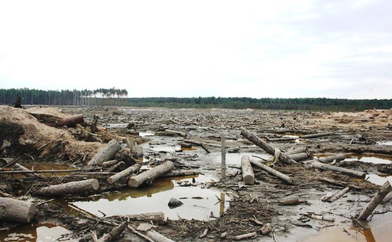 Nhà hoạt động xã hội nỗ lực cứu rừng khỏi nạn khai thác hổ phách lậu tại Ukraine