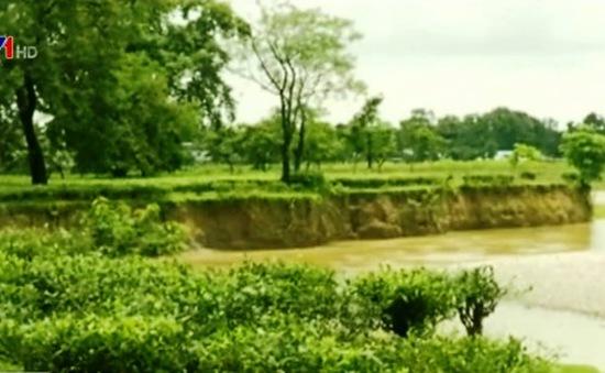 Ngành chè Ấn Độ điêu đứng vì sạt lở đất