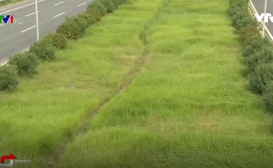 700 tỉ đồng để cắt cỏ cho toàn Hà Nội là đắt hay rẻ?