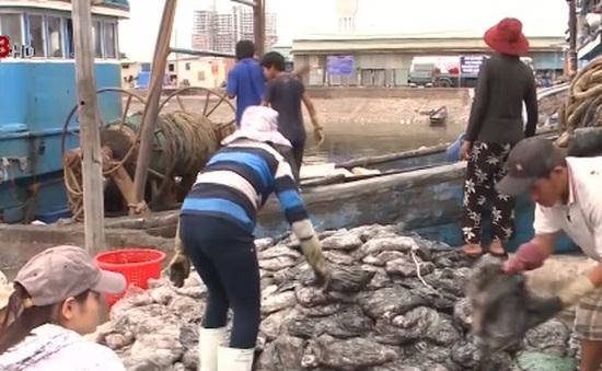 Đà Nẵng xử lý ô nhiễm ở âu thuyền Thọ Quang