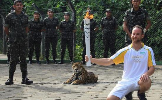 Báo đốm bị bắn chết sau khi rước đuốc Olympic Rio