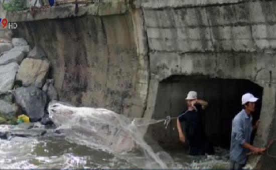 Người dân Đà Nẵng bắt hàng tấn cá nước ngọt sau bão số 4