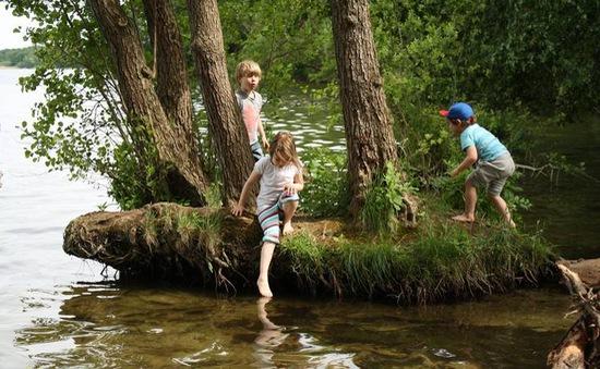 Trẻ lăn lộn khám phá ở các lớp học trong rừng tại Đức