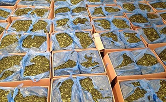 """Bộ Công an đề nghị xem """"lá Khat"""" là ma túy"""