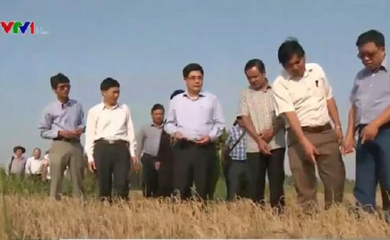 Bộ trưởng Bộ NN&PTNT kiểm tra hạn hán, xâm nhập mặn tại Kiên Giang