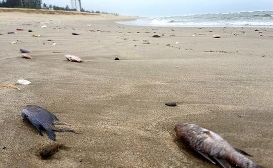 Quảng Bình: Một cháu bé bị ngộ độc nghi do ăn cá chết