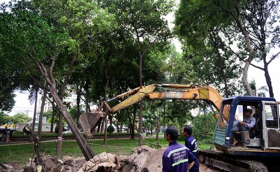TP.HCM: Xử lý hàng chục cây xanh phục vụ thi công tuyến metro
