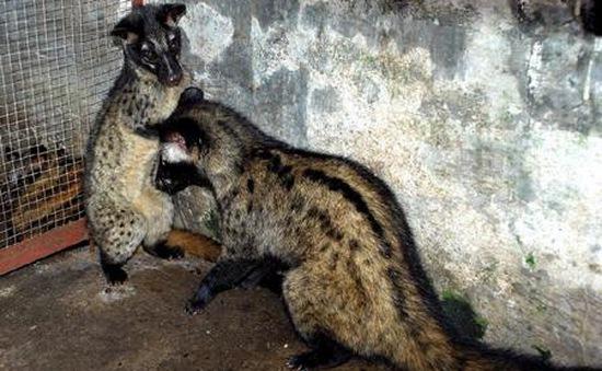Nhức nhối nạn săn bắt động vật hoang dã trái phép