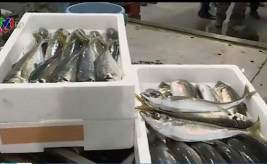 Kinh nghiệm xây dựng thương hiệu cá ở Nhật Bản