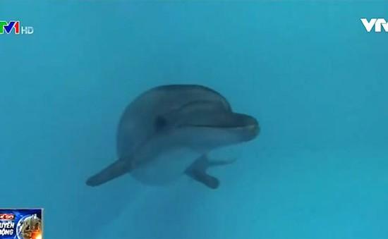 Công nghệ sóng âm lấy cảm hứng từ cá heo