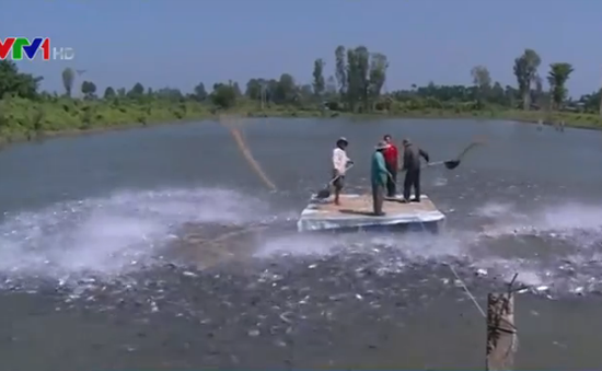 Rầm rộ đánh bắt thủy sản bằng xung điện trên sông Hậu