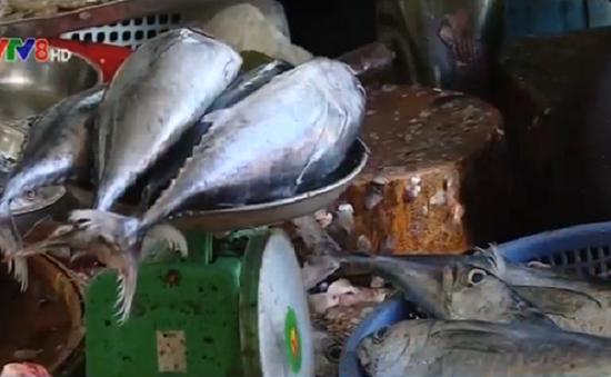 17 mẫu thủy - hải sản tại TT-Huế trong giới hạn an toàn