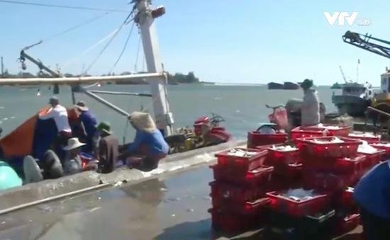 Quảng Trị: Được hỗ trợ thu mua hải sản, ngư dân yên tâm bám biển