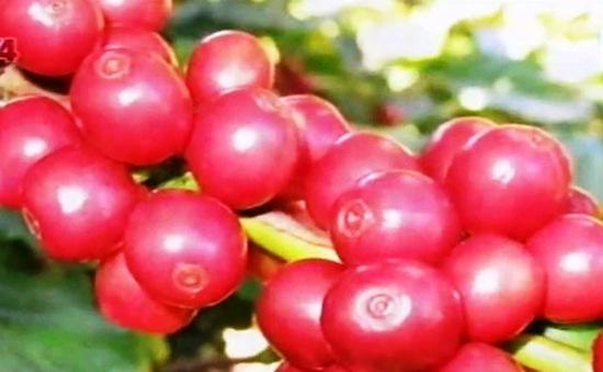 Hợp tác quốc tế nâng cao chất lượng nông sản