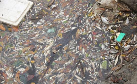 Khẩn trương xác định nguyên nhân cá biển chết bất thường