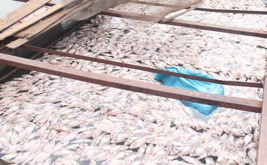 Người dân Đồng Nai không đồng tình với nguyên nhân cá chết của Sở TNMT