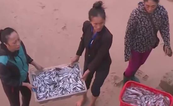 Cá chết ở Kỳ Anh, Hà Tĩnh được bán đắt hàng