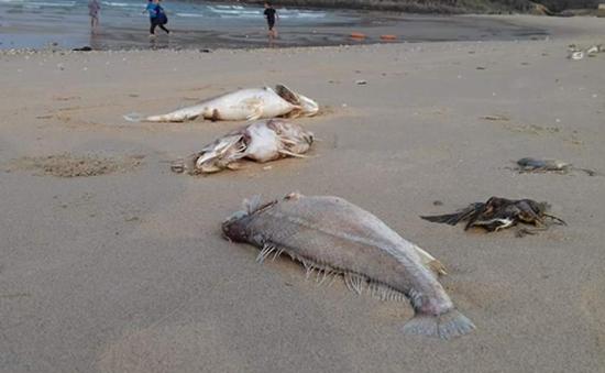 Cá chết hàng loạt ở miền Trung: Không do nguồn nước và dịch bệnh