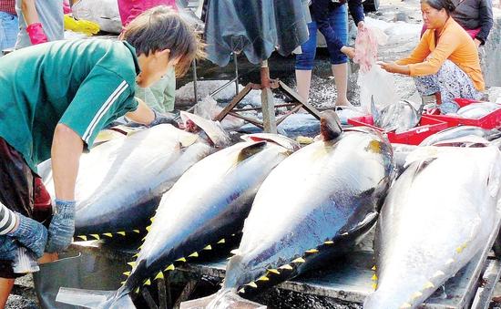 """Cá ngừ Việt vào thị trường Mỹ phải có chứng nhận """"an toàn cá heo"""""""