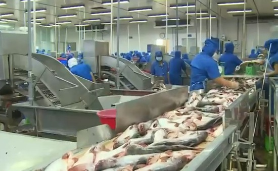 Kiểm tra 100% các lô hàng cá tra xuất khẩu vào Mỹ