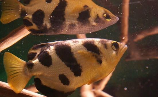 Cá có thể nhận diện mặt người