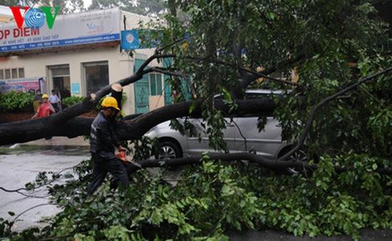 Liên tiếp 2 vụ cây gãy đổ, đè vào ô tô tại TP.HCM
