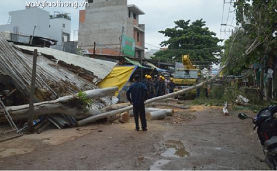 Cây xanh ngã đổ giữa chợ tại TP.HCM, 1 người bị thương