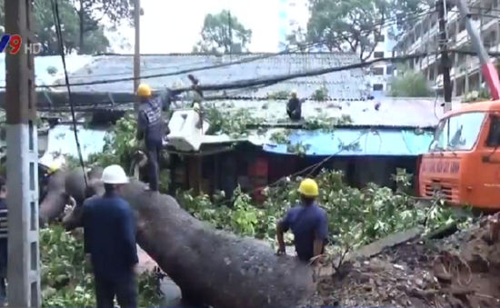 TP.HCM: Mưa lớn, cây cổ thụ bật gốc đè vào nhà dân