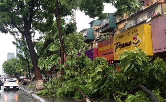 Café Sáng với VTV3: Nhìn lại hình ảnh hoang tàn vì ảnh hưởng bão số 1