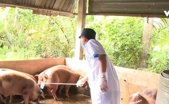 Hơn 280.000 hộ cam kết không dùng chất cấm trong chăn nuôi