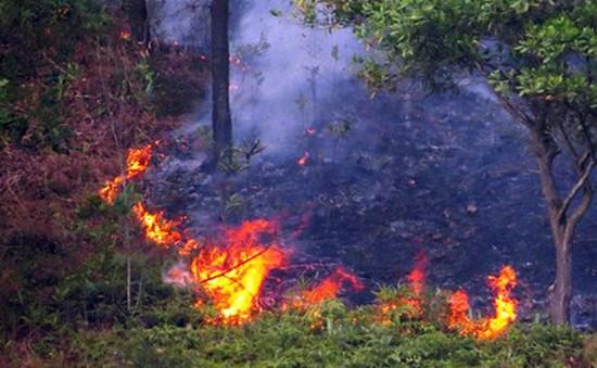 Cháy rừng tại Thủy Nguyên, Hải Phòng