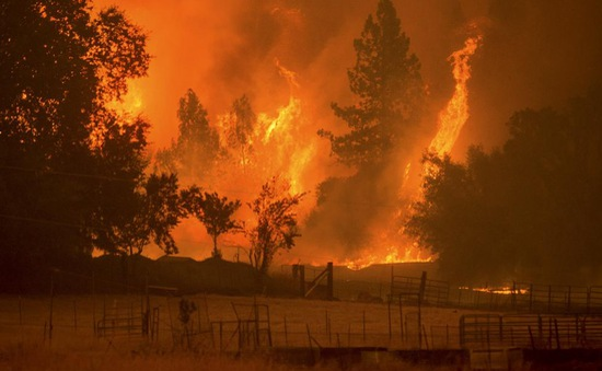 Cháy rừng ở Los Angeles, 5.000 người phải sơ tán