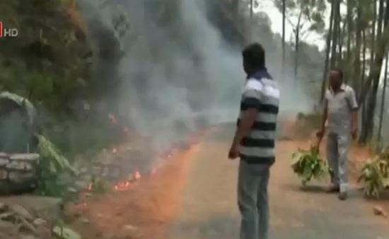 Ấn Độ bắt giữ 4 người nghi gây cháy rừng