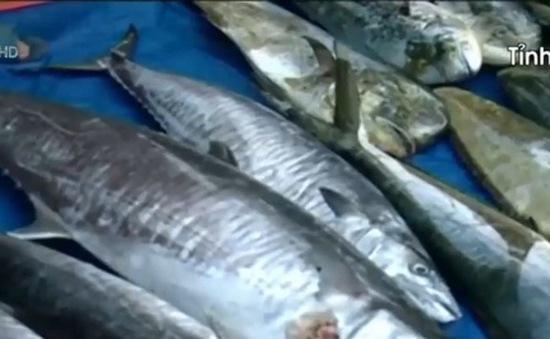 Chỉ định 4 ngân hàng cho vay tạm trữ hải sản